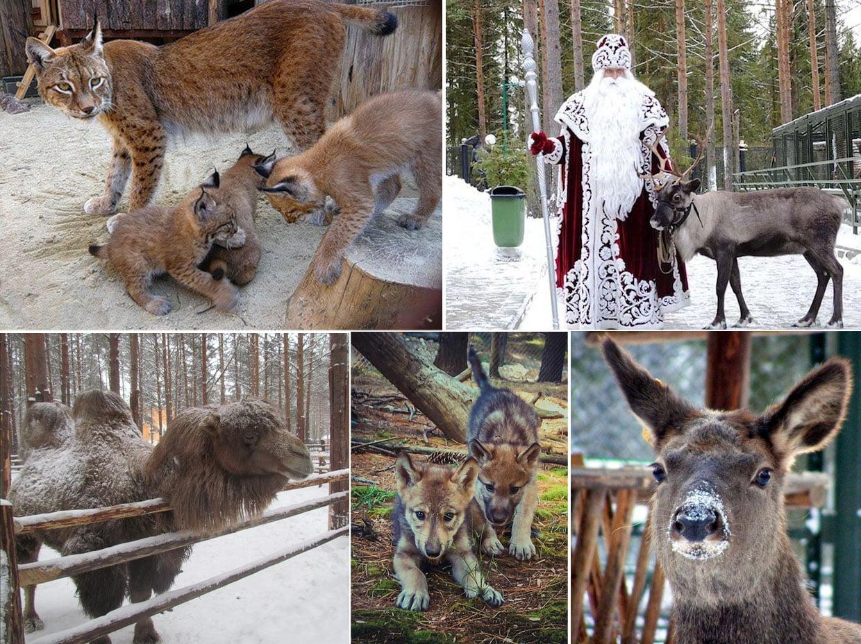Зоопарк Вотчины Деда Мороза