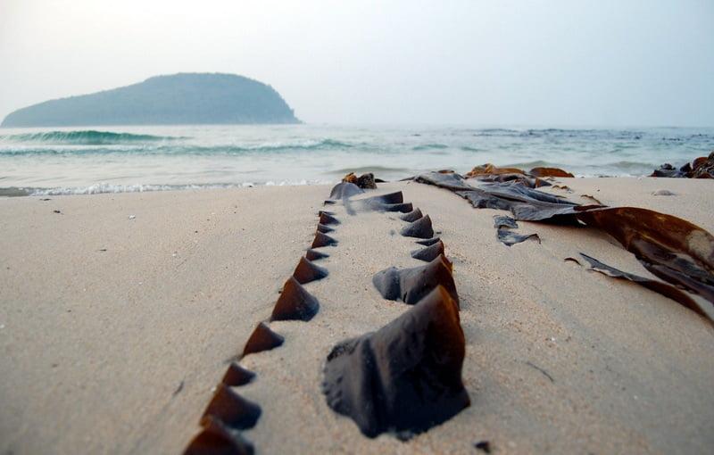 Бухта Поющего песка на материке у острова Петрова