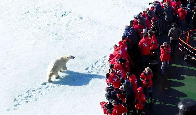 """Белый медведь у борта атомного ледокола """"50 лет Победы"""""""