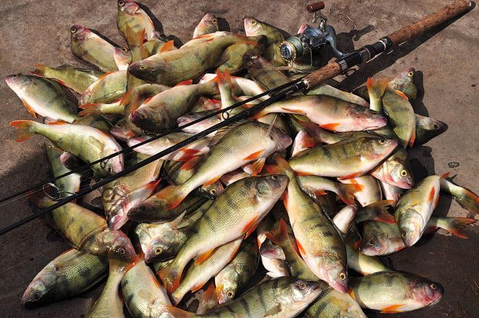 рыбалка на озере Чаны