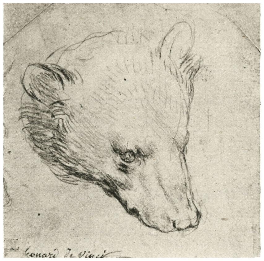 """Леонардо да Винчи. Рисунок """"Голова медведя"""""""