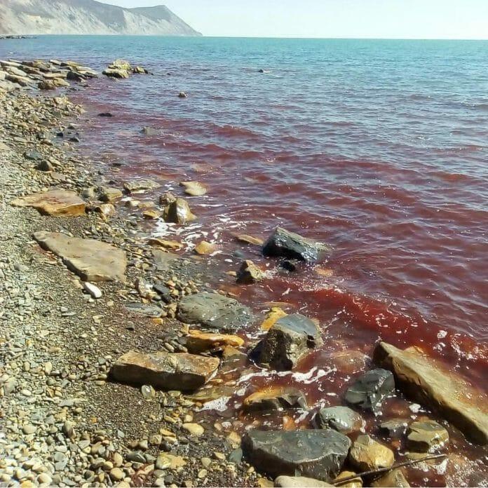Анапа. море стало кроваво-красного цвета