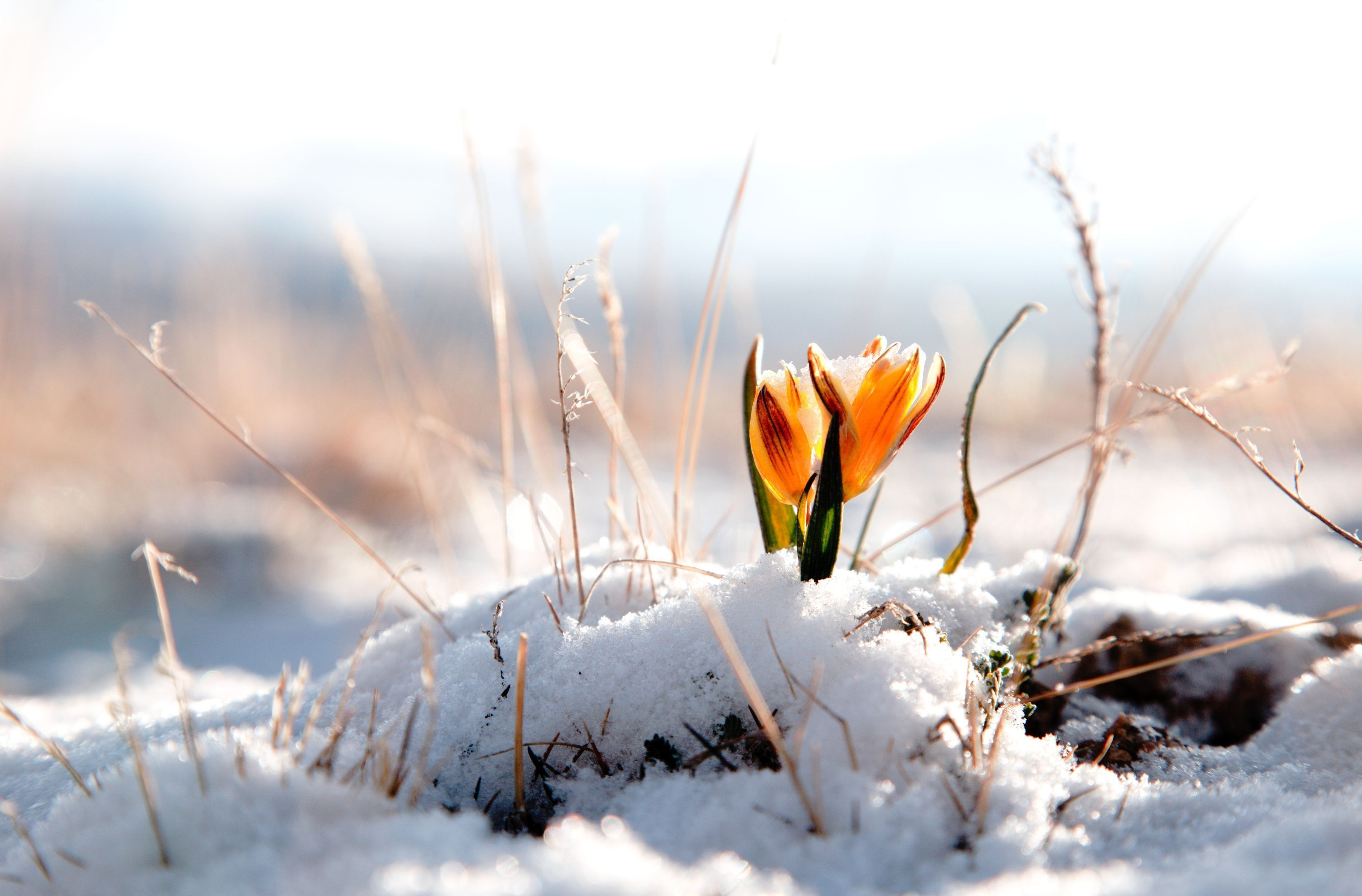 Апрель. первоцвет