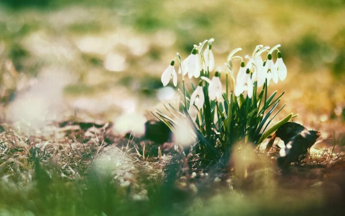 Апрель весна Подснежники