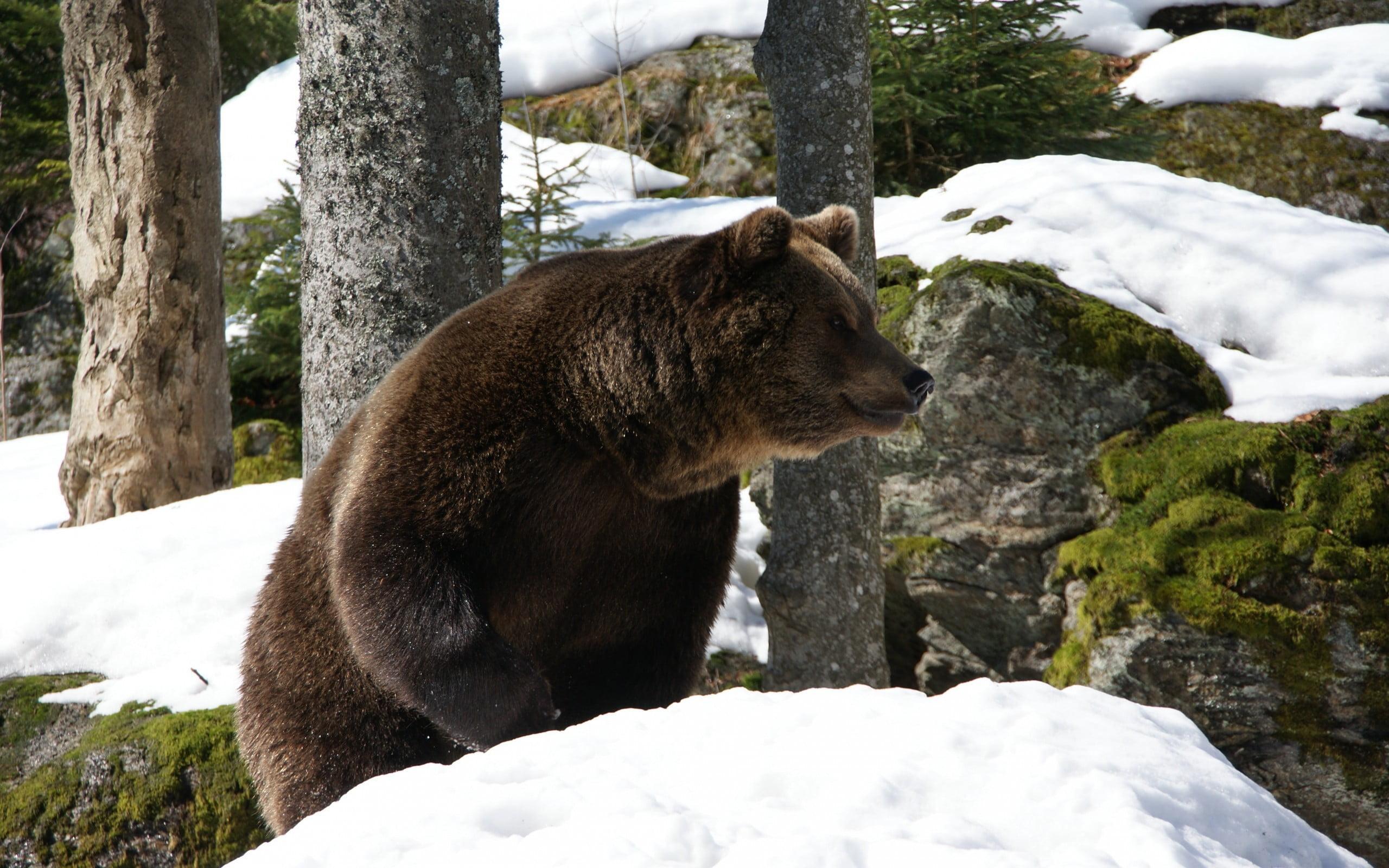 Весна. Медведь
