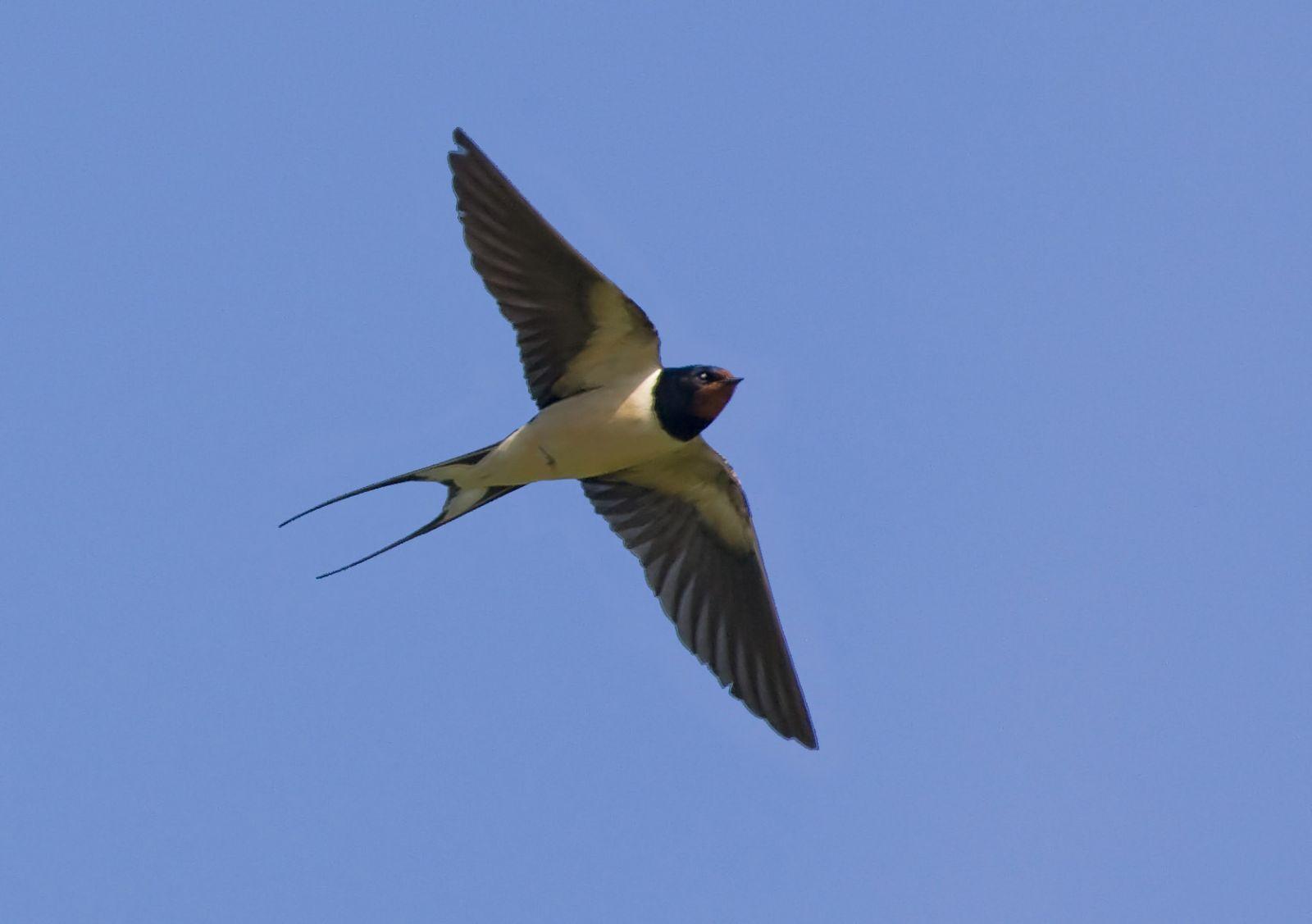 Птицы весна