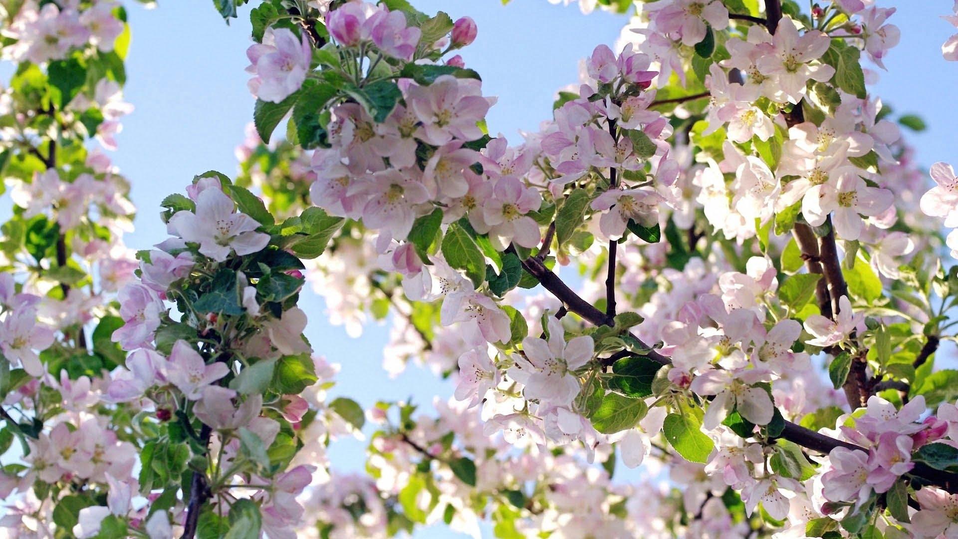 май. цветущие сады